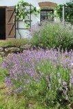 Levandulová terasa na jaře